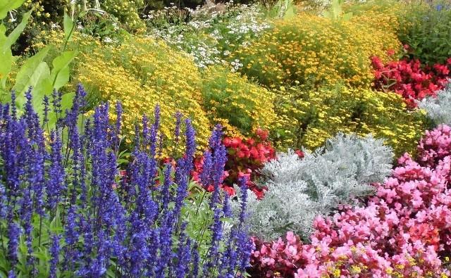 Na rabatach kwiatowych często coś dosadzamy. Łatwo wtedy uszkodzić rośliny, które nie są w danym momencie widoczne. Jesienią mogą ucierpieć cebulki, wiosną - późno schodzące byliny.