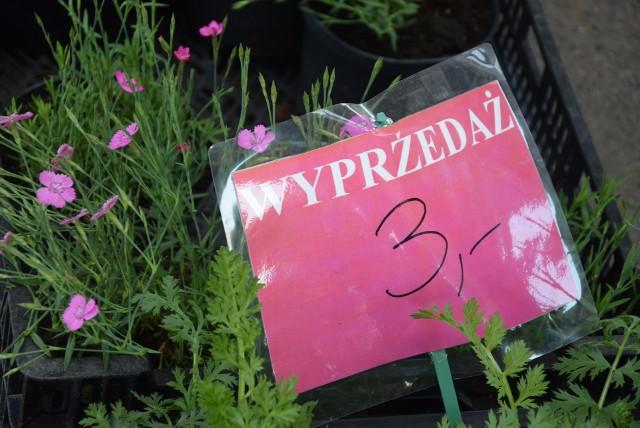 Kwiaty i zioła do ogrodu i doniczek. Na giełdzie Agrohurt przy ul. Lubelskiej w Rzeszowie (popularne PTHW), sprawdziliśmy, co się teraz sprzedaje.