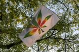 Przemycali do Polski leczniczą marihuanę. Staną przed sądem