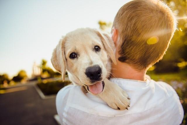 Coraz więcej osób decyduje się na przygarnięcie lub kupienie psa. Posiadaczy tych czworonożnych zwierzaków nie trzeba przekonywać, że obecność psa w domu odmienia życie. Warto pamiętać, że pies to także wiele obowiązków. Ich nieprzestrzeganie może wiązać się z mandatem. Zobaczcie, o czym muszą pamiętać właściciele psów. Szczegóły na kolejnych zdjęciach >>>