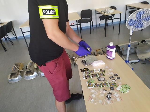Plantację marihuany sępoleńscy kryminalni odkryli na posesji radnego RM w Sępólnie Mateusza O.