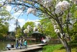 Wiosna w Ogrodzie Japońskim we Wrocławiu. Jest pięknie! [ZDJĘCIA]