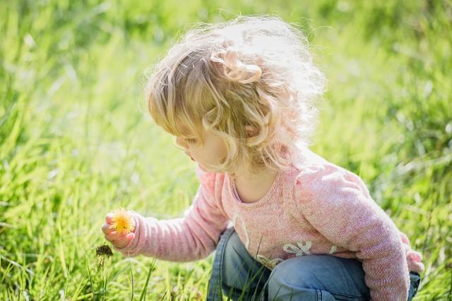 Konwalie - popularne kwiaty są piękne, pachnące i niestety... niebezpieczne.  Zawierają toksyczne związki, które mogą być przyczyną zatrucia i zagrażać życiu dzieci!