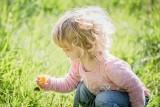 Popularne i lubiane kwiaty mogą zagrażać życiu dzieci i zwierząt. Trujące konwalie!