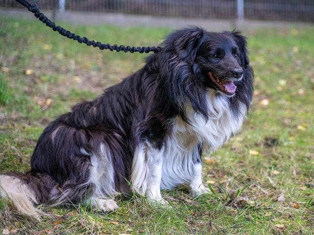 Jeden z psów odebranych pseudohodowom z Somonina