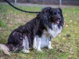 Sopot: Psy odebrane pseudohodowcom przez Animalsów trafiły do miejskiego schroniska. Czekają na adopcję! [zdjęcia]