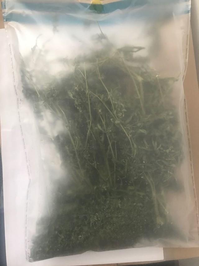 Mundurowi z komisariatu na toruńskim Podgórzu podczas interwencji w jednym z mieszkań na ul. Włocławskiej odkryli plantację marihuany.