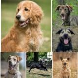 Te psy czekają na adopcję w bydgoskim schronisku. Są niesamowite! Zobacz, jak wyglądają [zdjęcia]