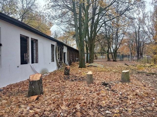 Klub Przyrodników Koło Poznańskie poinformował, że w parku przy Grunwaldzkiej 55 rozpoczęła się wycinka drzew i krzewów pod  budowę Centralnego Zintegrowanego Szpitala Klinicznego w Poznaniu. Zdaniem ekologów w trakcie wycinki zniszczono siedliska ptaków chronionych i ssaków. Klub sprawę zgłasza do prokuratury.