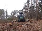 Wycinka drzew na Głębokim bulwersuje. Jednak leśnicy tną planowo. – Tak trzeba dla lasu, dla ludzi – uspokajają.