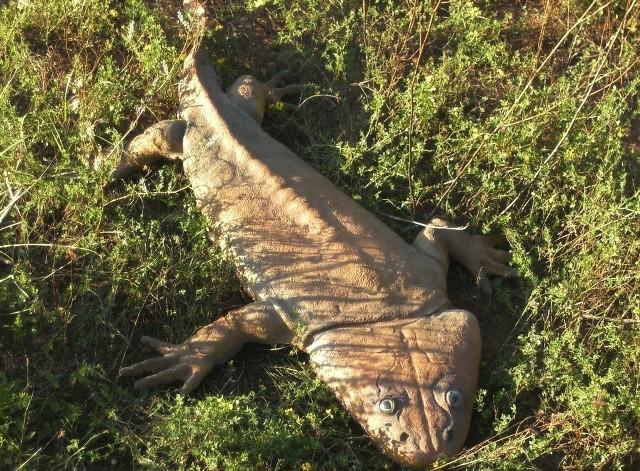 Metopozaury to zwierzęta wodne, ale oddychające płucami