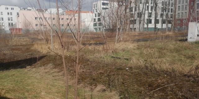 Zarośnięty plac po targowisku miejskim przy ulicy Zielińskiego.