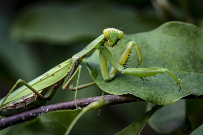 Dr hab. Paweł Koperski mówi o wymierających owadach i o...