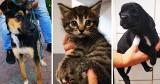Psy i koty do adopcji. Schronisko w Toruniu czeka na chętnych do przygarnięcia zwierzaka