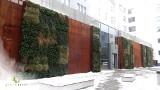 Greenarte z Gliwic to specjaliści od zielonych ścian. Pionowe ogrody zdobią centra miast. Taki ogród jest także na rynku w Katowicach