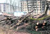 Wycinka drzew. Wchodzą nowe zasady