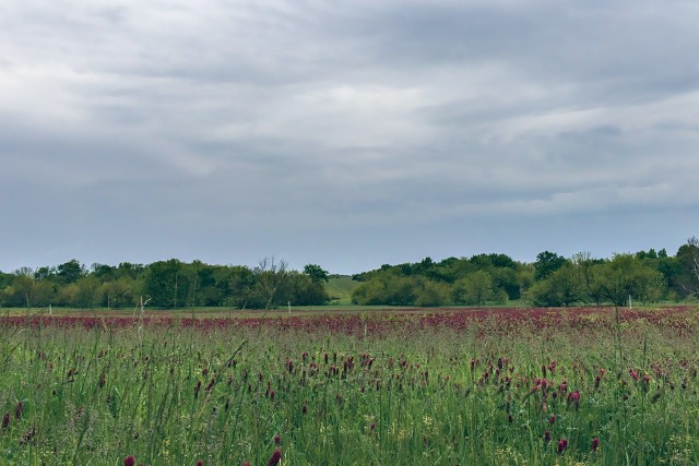 """Chcesz kupić grunt rolny w Lubelskiem? Tych okazji nie możesz przegapić! Kliknij w przycisk """"zobacz galerię"""" iprzesuwaj zdjęcia w prawo - naciśnij strzałkę lub przycisk NASTĘPNE."""