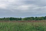 Te grunty rolne w Lubelskiem kupisz w świetnej cenie! Zobacz oferty z licytacji komorniczych z regionu [29.03.2021]