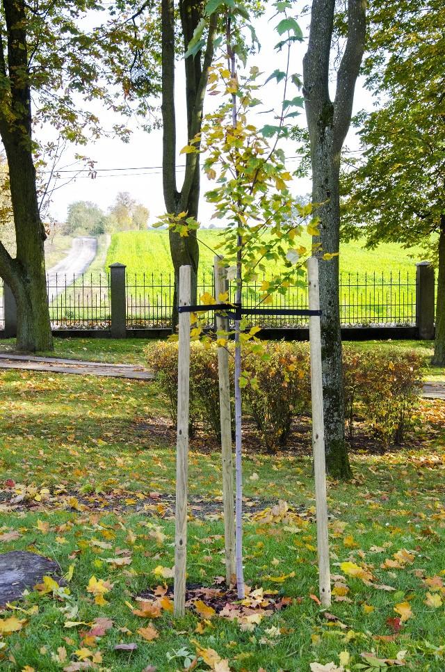 W parku przy Ośrodku Chopinowskim dokonano nasadzeń nowych drzew ikrzewów