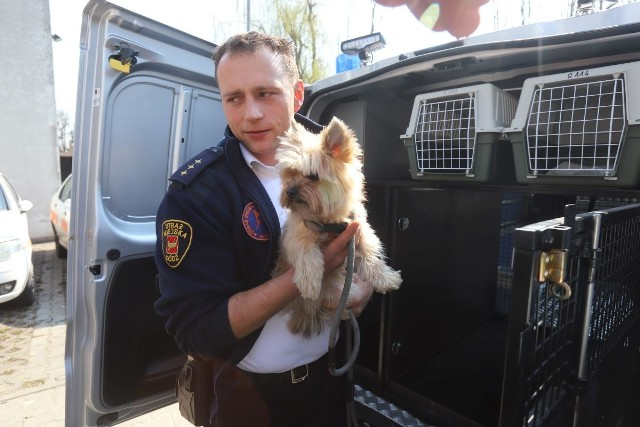 Patryk Polit współtworzył Animal Patrol straży miejskiej.