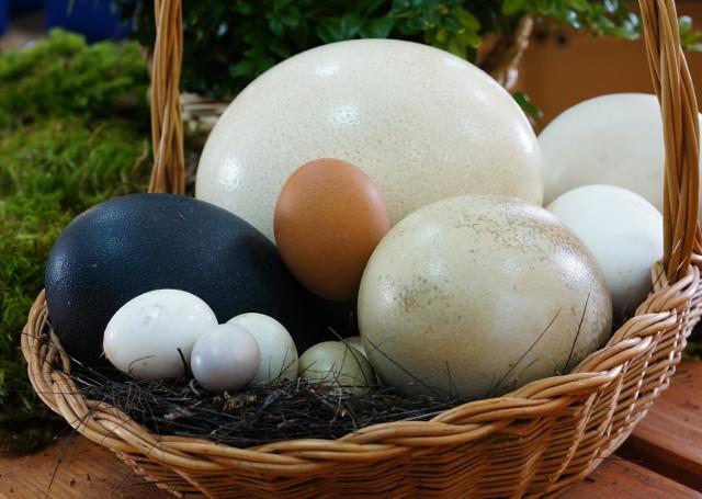 Jaja w zoo