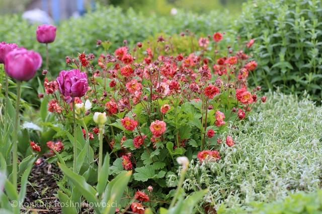Byliny, krzewy i pnącza - wiele atrakcyjnych roślin i ich odmian pojawia się co roku na polskim rynku. Oto rośliny nagrodzone na międzynarodowej wystawie Zieleń to Życie.