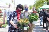 Zielone Ogrody nad Odrą w Nowej Soli. Drugi dzień kiermaszu ogrodniczego. Tłum klientów i wielkie korki. Zobacz zdjęcia