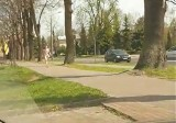 Jeden golas spacerował ulicami miasta, drugi siedział na kominie [WIDEO]