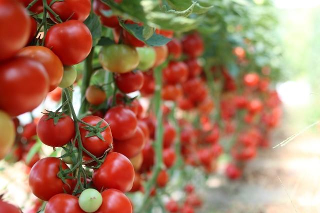 Brudna 12. To lista 12 warzyw i owoców zawierających najwięcej pestycydów.