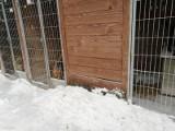 Ostra zima, czyli tragedia dla psów w łódzkim schronisku dla bezdomnych zwierząt przy ul. Marmurowej