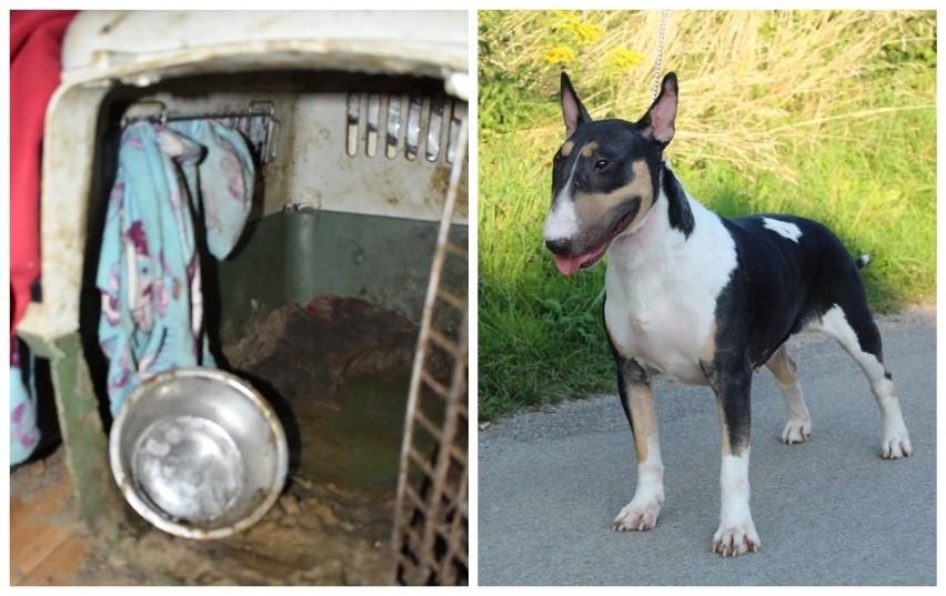 Psy były stłoczone na czas remontu, ale zadbane i dobrze zaopiekowane - mówi właścicielka hodowli pod Zabłudowem. TOZ pokazuje za to zdjęcia z interwencji. Tu widać wszystko - podkreśla prezes organizacji prozwierzęcej.
