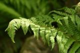Te rośliny pomagają w walce z smogiem i papierosowym dymkiem