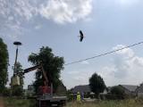 Pracownicy Urzędu Miejskiego w Choroszczy uratowali bocianie gniazdo zniszczone po burzy! (zdjęcia)