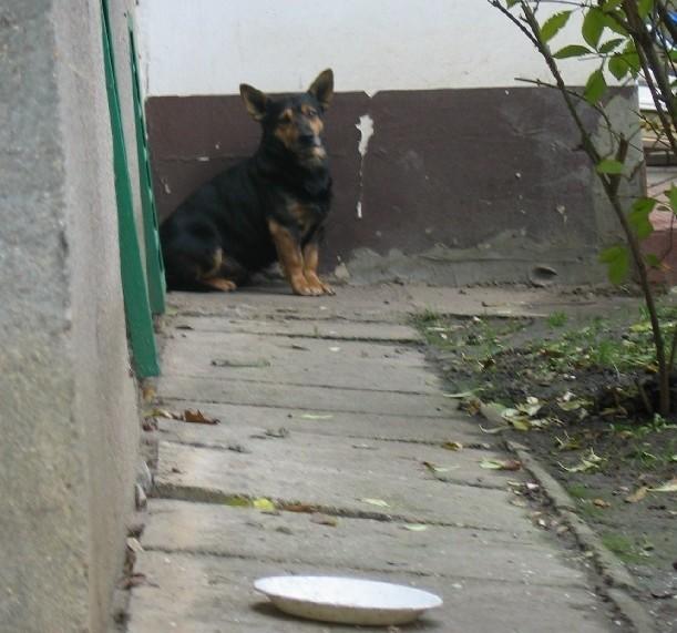 Mieszkańcy tego psa dokarmiają od wielu miesięcy. Przydałby mu się prawdziwy dom.