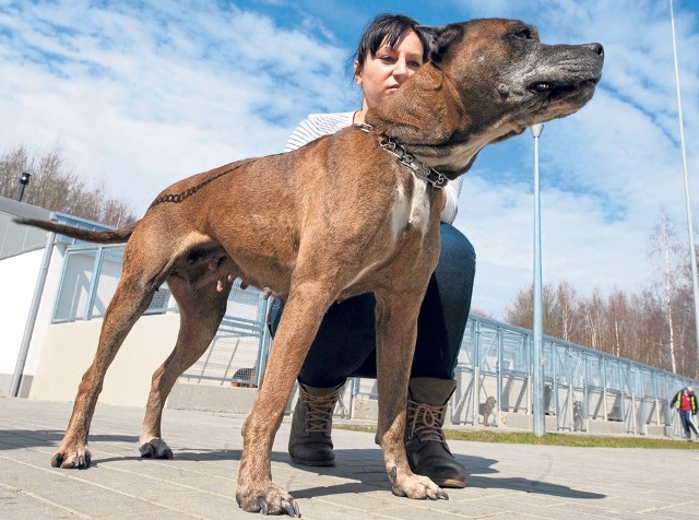 Podaruj mieszkańcom psiego azylu trochę czułości - w sobotę od godz. 11 możesz zabrać podopiecznego schroniska na spacer.