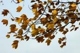 Uwaga! Silny wiatr w Świętokrzyskiem. Jest ostrzeżenie IMGW