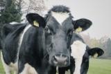 Nowe rozporządzenie ministra rolnictwa zmniejsza o połowę pieniądze na badania postępu biologicznego w produkcji zwierzęcej