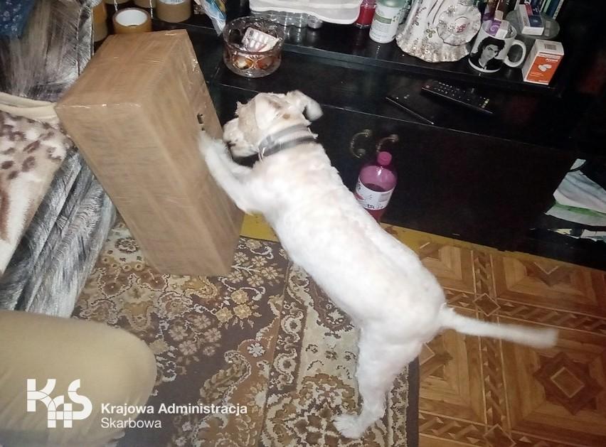 Funkcjonariuszom pomagał pies służbowy Kolia.