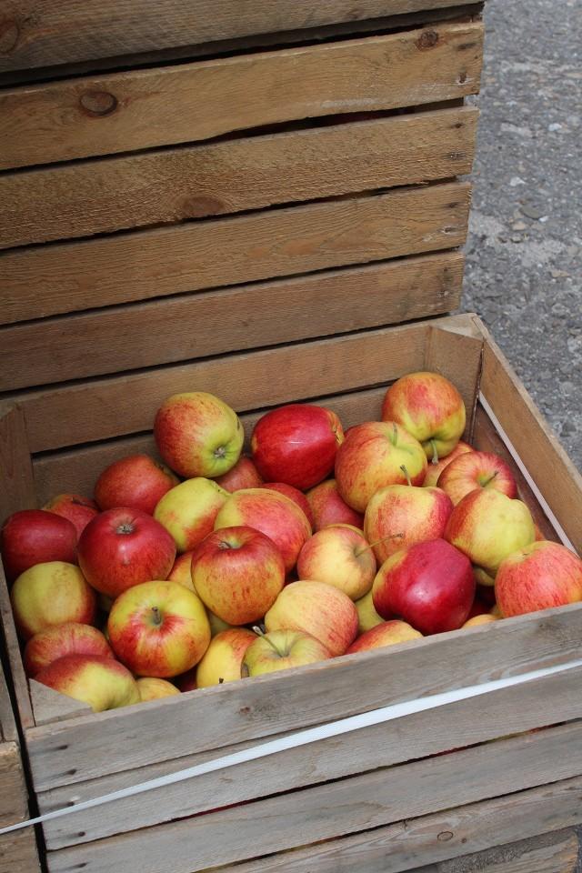 Darmowe jabłka w Mysłowicach