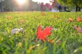 Pielęgnacja trawnika jesienią. Jak przygotować trawnik do zimy: nawożenie, koszenie, wapnowanie