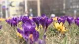 Wiosenne przesilenie - czy już nas dopadło? Jak radzić sobie z objawami?