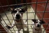 Bydgoskie schronisko zaprasza bydgoszczan na spacery z psiakami, czekającymi na adopcje [ZDJĘCIA]