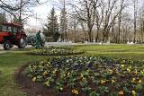 inowrocławskich parkach i na skwerach rozpoczęły się nasadzenia kwiatów