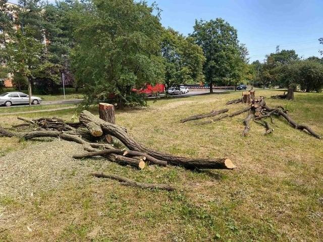 Trwa budowa tramwaju na Górkę Narodową, wycinane są drzewa