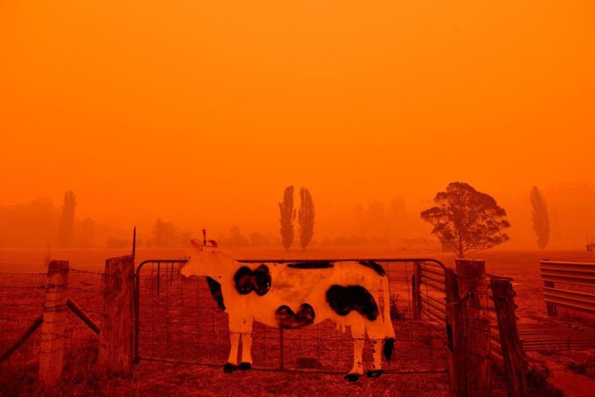 Australia: Pożary buszu mogą trwać jeszcze wiele miesięcy. Giną ludzie i zwierzęta [ZDJĘCIA] [WIDEO]