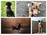 Psy z poznańskiego schroniska szukają domu. Sprawdź, jak wygląda adopcja podczas pandemii koronawirusa