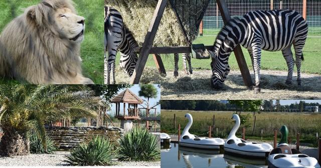Przed nami piękny weekend. Warto wybrać się do ZOO Safari Borysew ZDJĘCIA, CENNIK