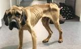 W hodowli psów w Myszkowie głodzono zwierzęta. Makabryczną historię ujawniło schronisko i Fundacja Do Serca Przytul Psa w Zawierciu