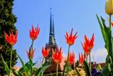 Tłumy w ogrodzie botanicznym. Zakwitły już tulipany (ZDJĘCIA)