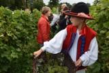 Winobranie na Winnicy Samorządowej w Zaborze. Będzie barwny korowód, wspólne zbieranie winogron i moc atrakcji